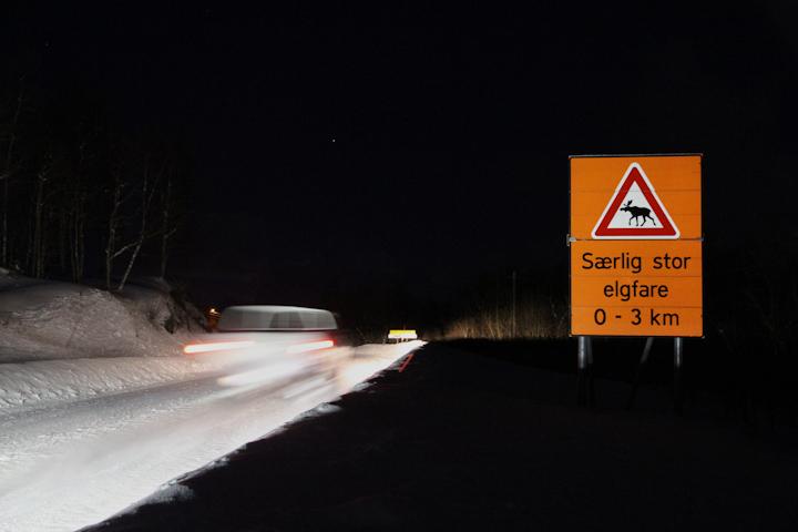 Bilførere bør være ekstra oppmerksom på elgfaren for tiden. Illustrasjonsfoto: Robin Lund .no