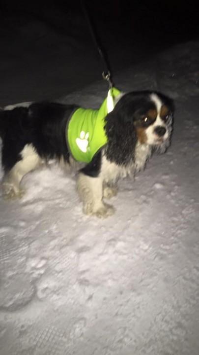 Hund i Beisfjord. (Foto: Politiet)